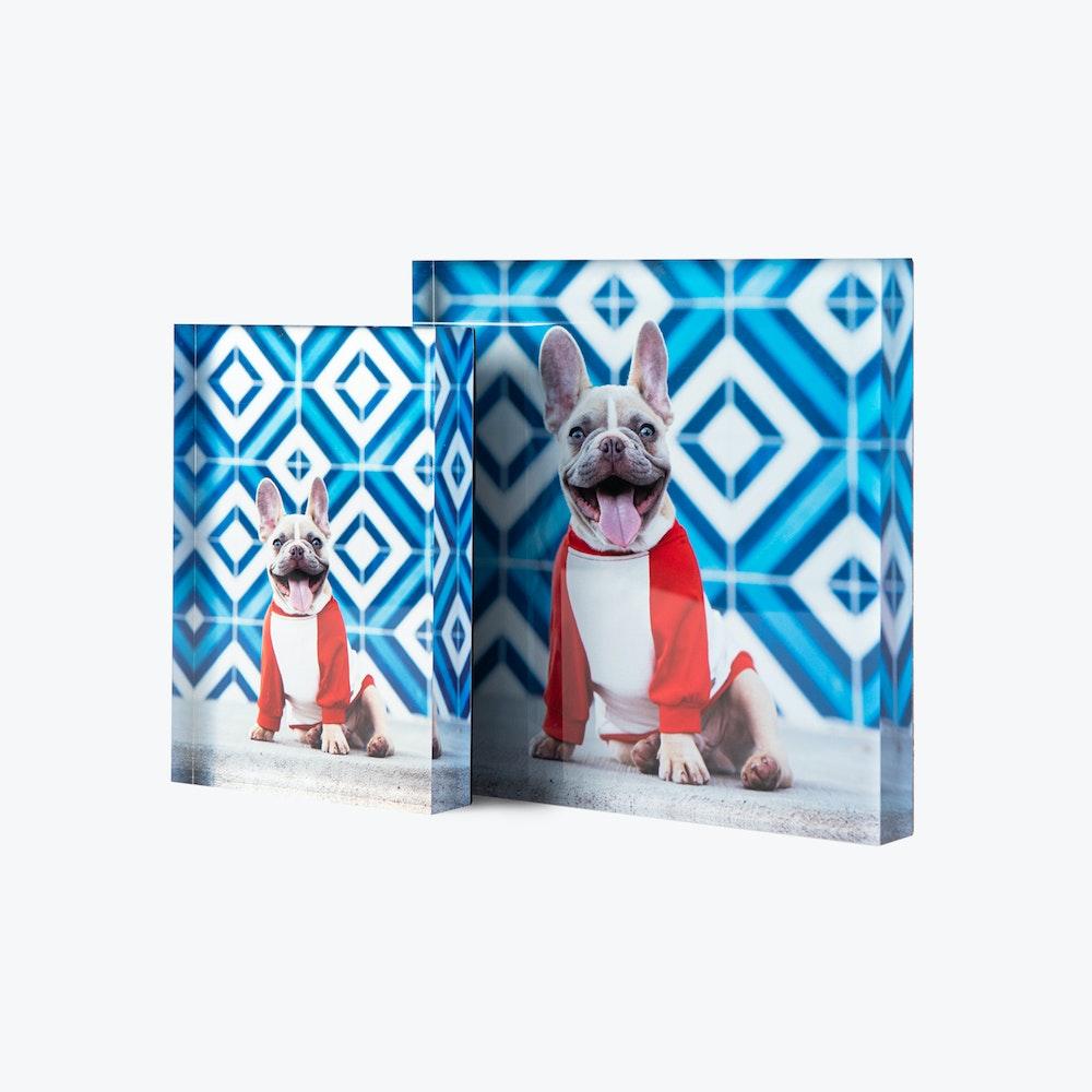 Dog portrait Acrylic Blocks in two sizes